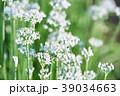 韮 花 野菜の写真 39034663