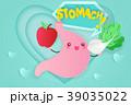 腹部 解剖学 キャラクターのイラスト 39035022