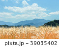 麦 麦畑 穂の写真 39035402