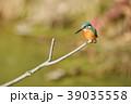 カワセミ 翡翠 小鳥の写真 39035558