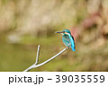 カワセミ 翡翠 小鳥の写真 39035559