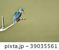 カワセミ 翡翠 小鳥の写真 39035561