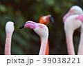 フラミンゴ・アップ 39038221