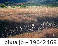 浄土平湿原のススキ群落 39042469