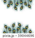 白背景 切り抜き 孔雀のイラスト 39044696