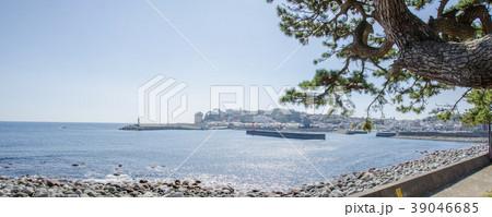 伊豆稲取漁港と海防の松 39046685