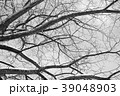 冬の木 モノクロ 39048903