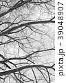 冬の木 モノクロ 39048907