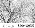 冬の木 モノクロ 39048935