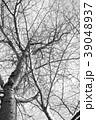 冬の木 モノクロ 39048937