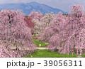 【三重県】鈴鹿の森庭園のしだれ梅 39056311