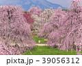【三重県】鈴鹿の森庭園のしだれ梅 39056312