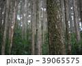 檜林 39065575