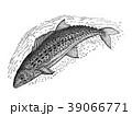 サワラ 魚 海水魚のイラスト 39066771