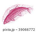 サワラ 魚 海水魚のイラスト 39066772