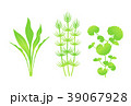 水草 39067928