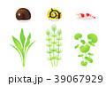 水草 39067929