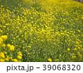菜の花 39068320