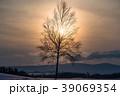 冬 新栄の丘 夕暮れの写真 39069354