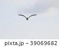 セグロカモメ (背黒鴎) その4。 Herring gull 39069682