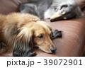 ダックス 39072901