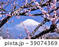 春の梅林と富士山 39074369