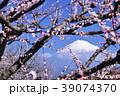 春の梅林と富士山 39074370