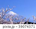 春の青空と梅 そして富士山 39074371