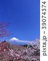 日本の早春 富士山と満開の梅 39074374