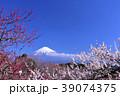 日本の早春 富士山と満開の梅 39074375