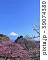 富士山と春の梅園 39074380