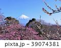 富士山と春の梅園 39074381