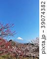 富士山と春の梅園 39074382