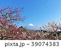 富士山と春の梅園 39074383