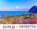 花桃咲く西伊豆井田・海越しの富士山 39080700