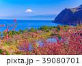 花桃咲く西伊豆井田・海越しの富士山 39080701