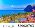 花桃咲く西伊豆井田・海越しの富士山 39080703