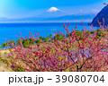 花桃咲く西伊豆井田・海越しの富士山 39080704