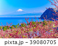 花桃 富士山 海の写真 39080705