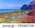 花桃咲く西伊豆井田・海越しの富士山 39080706