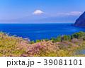 《静岡県》河津桜咲く西伊豆井田・海越しの富士山 39081101