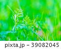 【神奈川県】自然イメージ 39082045