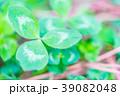【神奈川県】自然イメージ 39082048