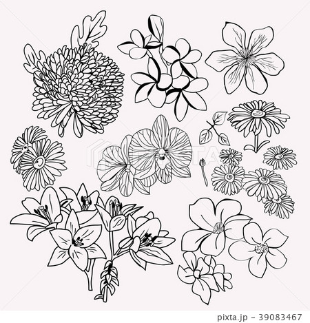 collection botanical set Monochrome illustration.  39083467