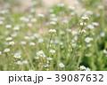 花 アップ ナズナの写真 39087632