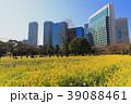 菜の花 春 浜離宮恩賜庭園の写真 39088461