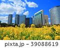 菜の花 春 浜離宮恩賜庭園の写真 39088619