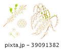 雪柳 39091382
