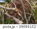 伐採された木 39093152