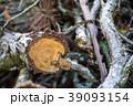 伐採された木 39093154